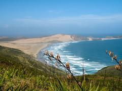 105 - Vue de Te Paki depuis Cape Reinga
