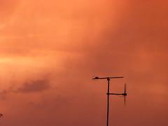 Coucher de soleil après orage de grêle, Tours, quartier des sçavans, 9 juin 2014 (Guillaume Cingal) Tags: sunset tours mariotte toursnord