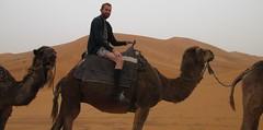 Camels in Erg Chebbi (Meknès-Tafilalet Region, Morocco) (courthouselover) Tags: animals morocco maroc camels ergchebbi المغرب almaghrib meknèstafilalet meknèstafilaletregion régiondumeknèstafilalet