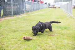 Kent_County_Show_2014_019
