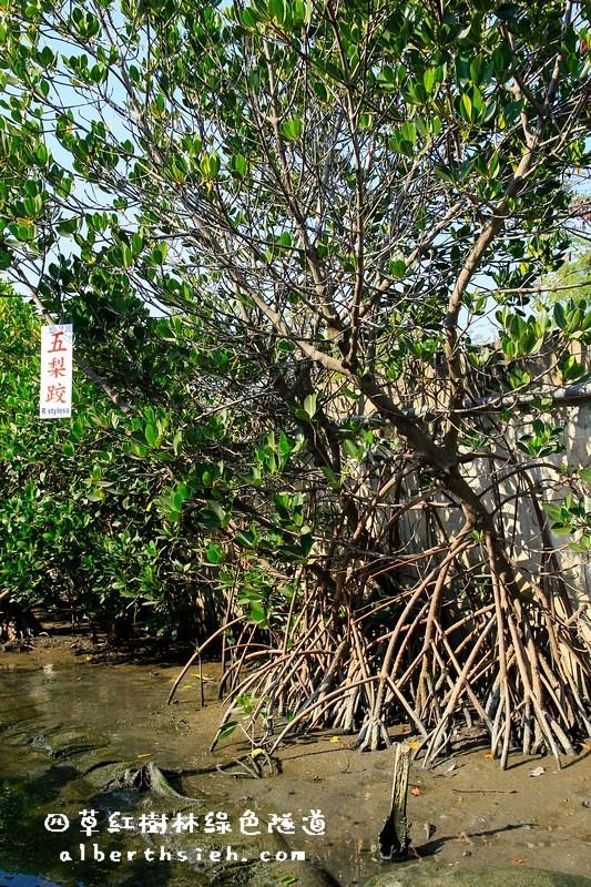 【台南旅遊景點】台南安南.四草紅樹林綠色隧道(海上森林台灣亞馬遜河)