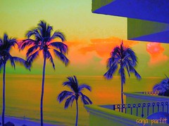 from my balcony PV (Sonja Parfitt) Tags: holiday colors palms mexico hotel balcony puertovallarta photomanipulated