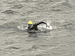 Ocean Swimmer in San Francisco Bay (DRUified) Tags: sanfrancisco california usa swimmer sanfranciscobay sanfranciscomaritimenationalhistoricpark swimmingintheocean oceanswimmer rebeccadruphotography