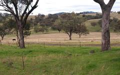TARCOOLA, Willow Tree NSW