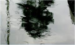 des ronds dans l 'eau........ (Elyane11) Tags: eau pluie gouttes averse