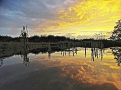 On Golden Pond (Deepgreen2009) Tags: sunset reflection home water weather clouds garden mirror golden pond