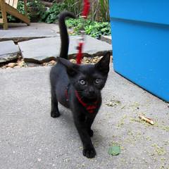 Mikayla takes a walk (Jimmy Legs) Tags: