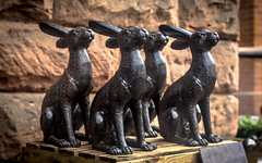 March Hares (73/365)