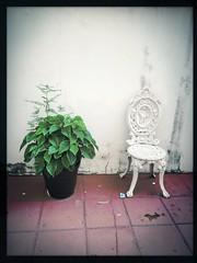 side by side (meeeeeeeeeel) Tags: iphone iphoneography poinsettia bicodepapagaio vasodeplantas vase bege beige cadeira chair green verde folhas foliage hipstamatic