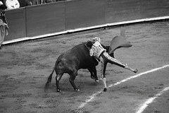 Fin (valeriaatorres) Tags: tauromaquia torero toros toreros cdmx plaza méxico bullfighting bullfight monochromatic monocromático outdoors animales arte cultura caballo zotoluco ponce