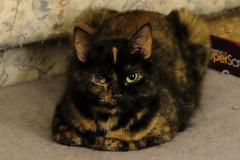 New Camera (samfeinstein) Tags: fuji xe2 iso5000 babycat cat handheld sooc nophotoshop