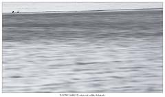 Ice-olated couple (Stefan Gerrits aka vanbikkel) Tags: finland sundsberg canon5dmarkiii canonef500mmf4liiusm nature wildlife vanbikkel bird birds lintu spring nonnetje smew uivelo mergellusalbellus ice water couple