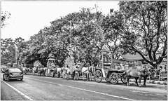 'The only impossible journey is the one you never begin.' (Ramalakshmi Rajan) Tags: kolkata quotes blackandwhite blackwhite nikond5000 nikon nikkor18140mm streetphotography india lifeinindia