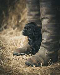 On guard (1 of 1) (d3max) Tags: 5dmk3 canon martinhillphotography puppies puppy