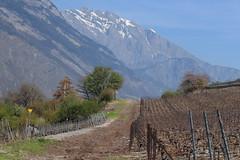 Charrat (bulbocode909) Tags: valais suisse charrat nature vignes arbres montagnes printemps vert bleu paysages chemins