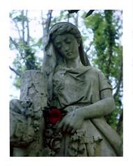 red camellia 2 (a perhaps hand) Tags: polaroidcamera polaroidlandcamera auto420landcamera instantcamera fujifp100c instantfilm statuary cemetery oakdalecemetery wilmingtonnc northcarolina