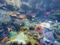00734931 Aquarium Berlin 1 - 2017 (golli43) Tags: aquariumberlin zoo fische krokodile quallen wasser wasserpflanzen amphibien insekten unterwasserwelt