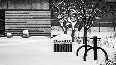 "Snow Storm Winter Park - Montreal, Quebec, Canada (Photographie Alexi ""Alvin"" Dagher Photography) Tags: alvin bw montreal nopeople outdoors photographer photography architecture bandw bin blackandwhite bnw canada city cityscape covered garbagebin horizontal landscape monochrome noone nobody park photos pics pictures quebec rubbishbin snow snowstorm snowedin snowflake snowscape trash trees winter with ©alexidagher"