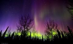 Magenta and Purple (Katy on the Tundra) Tags: