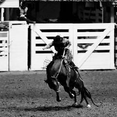 Can You Hear the Thunder (Thomas Hawk) Tags: dfw fortworth fortworthstockshowrodeo fortworthstockshowandrodeo texas usa unitedstates unitedstatesofamerica bw cowboy dmudallas012011 horse rodeo fav10 fav25 fav50