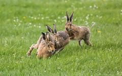 Run Girl Run (Steve C Waddingham) Tags: stevenwaddinghamphotography animal wild nature run wildlife canon flickr