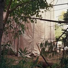 Backyard Jungle (jonnykam) Tags: backyard jungle bamboo veil sheath nude cloth rag tree nature outdoor backtonature construction watertower water system government rolleiflex35e rolleiflex35 rolleiflex film 120mm squareformat mediumformat ektar100 filmisnotdead