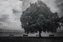 Empty Spaces.. (mhd.hamwi) Tags: emptiness empty nooneleft nobody nostalgia tree texture outdoor clouds cold winter chair sea nikon nikond5000 bw shore sad sadness autumn syria syrian seattle usa theshowmustgoon queen mohammadhamwi mhdhamwi art fineart illustration digitalart كرسي شجرة محمدالحموي بحر triste tužan nelangsa verdrietig 伤心 悲しい üzgün