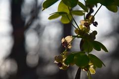 20170329_028_2 (まさちゃん) Tags: 光 シャドー シルエット shadow silhouette 小さな花