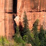 Fir Pine and Red Rock thumbnail