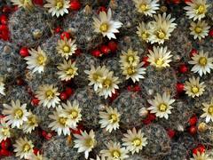 Wrocławski ogród botaniczny (tomek034 (Thank you for the 1 300 000 visits)) Tags: kwiaty sukulent kaktus wrocław ogródbotaniczny