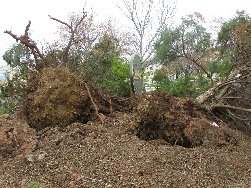 the uprooted When you uproot people, you move them from one place to a completely new one your parents may need to uproot you if your mom gets a.