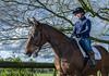 20170413-DSC08554.jpg (brian.quinlan) Tags: people kez horses emmanick animals athertonoldhallfarm