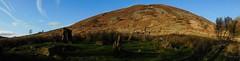 (RosieBartolozzi) Tags: unitedkingdom uk natural nature mountain mountains mountainous cwmaman aberdare wales southwales welshvalleys welsh green winter blueskies