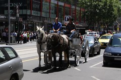 Horse drawn carriage stuck in traffic at Elizabeth and Little Collins Street (Marcus Wong from Geelong) Tags: piss shit stink smell odour horse drawn carriage touristtrap horsedrawncarriage melbourne melbournecbd