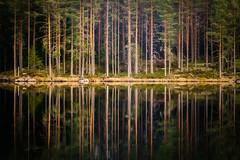 Enchanted forest (PixPep) Tags: glaskogen arvika värmland sverige sweden landscape nature enchantedforest reflections tarn