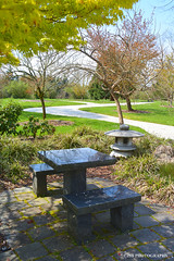 HBM! (JSB PHOTOGRAPHS) Tags: jsb084800006 seat trees sidewalk sun hbm happybenchmonday d600 nikon 35mm f2