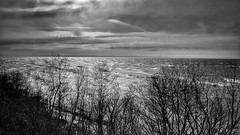 Sunlight and Waves (mswan777) Tags: lake michigan bluff waves water sunset evening tree silhouette monochrome black white seascape nikon d5100 landscape nikkor 1855mm scenic ansel sky cloud light reflection