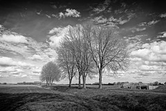 The Pencil Drawing Landscape (Alfred Grupstra) Tags: landscape oostwoud noordholland nederland nl nature tree blackandwhite ruralscene outdoors cloudsky sky field scenics nonurbanscene nopeople grass farm cloudscape england meadow season agriculture monochrome