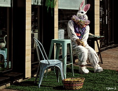 Joyeuses Pâques/Happy Easter (Jean S..) Tags: bunny easter chair table outdoor day grass green pink white store