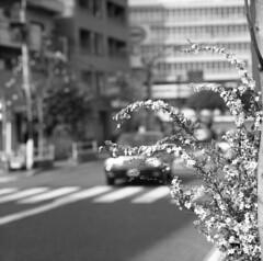 170320_ZenzaBronicaS2_002 (Matsui Hiroyuki) Tags: zenzabronicas2 zenzanon150mmf35 fujifilmneopan100acros