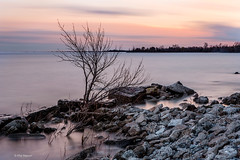 Lake Ontario dusk (4 minute long exposure) - Kew Beach, toronto (Phil Marion (80 million views - thank you all)) Tags: philmarion travel woodbinebeachflood beautiful cosplay candid beach woman girl boy teen 裸 schlampe 懒妇 나체상 फूहड़ 벌거 벗은 desnudo chubby fat young nackt nu निर्वस्त्र 裸体 ヌード नग्न nudo ਨੰਗੀ голый khỏa جنسي 性感的 malibog セクシー 婚禮 hijab nijab burqa telanjang обнаженный сексуальный عري nubile برهنه hot babe phat nude slim plump chick tranny cleavage sex slut nipples ass xxx boobs dick balls tits upskirt naked sexy bondage fuck piercing tatoo