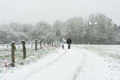 0417 (.niraw) Tags: hessen gladenbach schnee schneefall wiese zaun mann hund spaziergang bäume schneeflocken weg