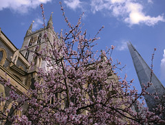 Southwark Cathedral (Adam Swaine) Tags: uk england sky london english canon buildings cathedral blossom britain cities historical shard 2014 swaine wwwadamswainecouk
