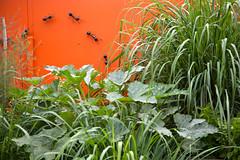 Prickly Pair Design (babushka) Tags: green garden succulent outdoor adelaide mandi 2014 flowersplants whitten opengarden mandiwhitten canoneos5dmkii weensyweb weensywebdesigns wwwmandiwhittencom photographybymandiwhitten pricklypairdesign michaeldeboo kennethinger