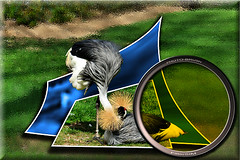 Grulla Real (Jocarlo) Tags: art ngc photowalk imagination animales texturas nationalgeographic specialeffects parques afotando flickraward fuerademarco sharingart montajesfotogrficos photowalkmelilla crazygeniuses pwmelilla virgiliocompany jocarlo flickrstruereflection1 flickrclickx adilmehmood