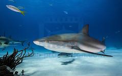 2014 03 TIGER BEACH-2026