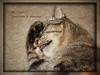 Oh Dear, Tomorrow is Monday! (gtncats) Tags: pet feline tabby felineportrait felinefaces photographyforrecreation