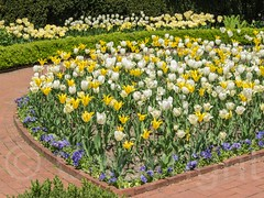 Blooming Flowers at the New York Botanical Garden, Bronx, New York City (jag9889) Tags: nyc newyorkcity usa ny newyork flower garden spring unitedstates blossom bronx unitedstatesofamerica landmark thebronx botanicalgarden nybg newyorkbotanicalgarden 2014 bronxpark allamericacity jag9889