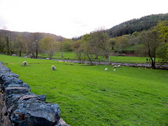 Typisch Wales: muurtje en schaapjes