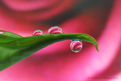 Rippled (uvaisjm - Al Seylani Photography) Tags: macro closeup refraction droplet waterdrops